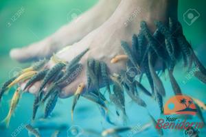 fish pedicure in benidorm indoor market